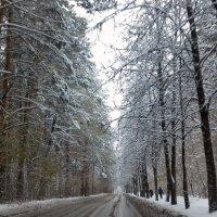 Дорога в Академгородке. :: Мила Бовкун