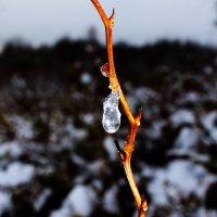 Первый снег. :: Андрей Скорняков