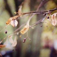 Последняя листва. :: Инна Малявина