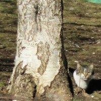 Кошка под березой :: Дмитрий Никитин