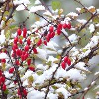 выпал беленький снежок :: валя