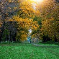 Осенний тихий вечер в парке... :: Таня Харитонова