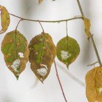 Осень-зима :: Елена Баландина