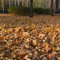 В старом парке снова осень... :: super-krokus.tur ( Наталья )