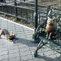 Невозмутимый кот :: Ирина Арефьева
