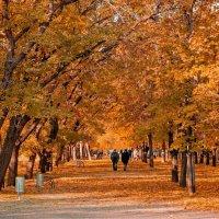 Золотая осень :: Люша