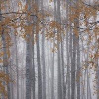 Осенний туман :: Иван Верхотурцев