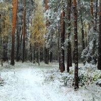 И снег шуршащей тишиной... :: Лесо-Вед (Баранов)
