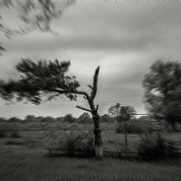 Ветер..... :: Таня Харитонова