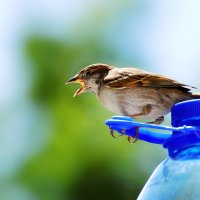 жарко! :: linnud