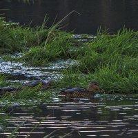 В траве :: Сергей Цветков