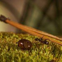 Одинокий муравей :: Оксана Лада