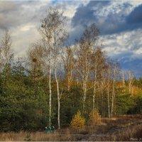 Берёзы сбросили листву :: Виктор Марченко