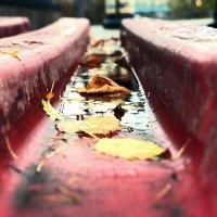 Осенний штрих на город грянул... :: Илона Огонь