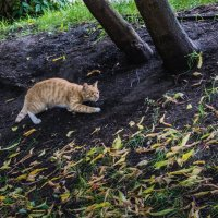 Случай на охоте :: Владимир Безбородов