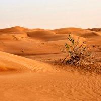 Пустыня :: Сергей Рычков