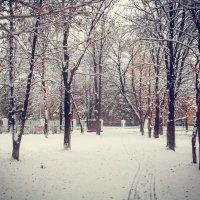 Снег в парке :: Вячеслав Баширов