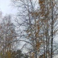 Осенний этюд. :: Мила Бовкун