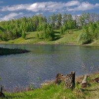 Лесное озеро :: Александр Березуцкий (nevant60)