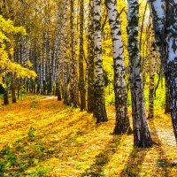 Осенний свет :: Виктор Зенин