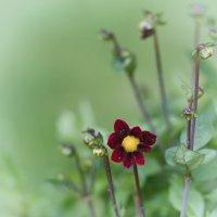 Цветик-восьмисполовинойцветик :: Val Савин