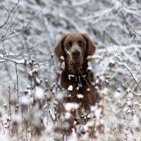 По первому снегу. :: Андрей Скорняков