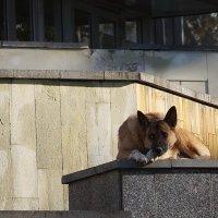 Хоть жизнь собачья, зато свободен :: MPS