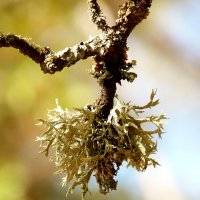 мох вместо листьев :: Александр Прокудин