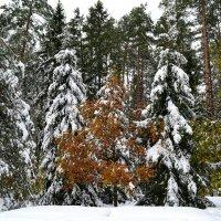 Ранняя зима :: Милешкин Владимир Алексеевич