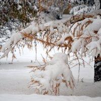 Зимняя картина осени :: ирина