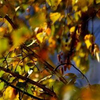 Еще недавнее  сияние осени за моим окном... :: Валерия  Полещикова