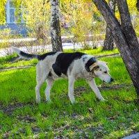 Собаки не понимают, когда мы покидаем их :: Света Кондрашова