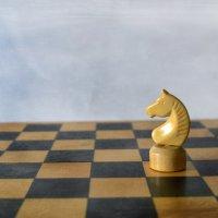 Конь на шахматной доске :: Галина Galyazlatotsvet
