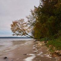 Фото осень 2 :: Genych