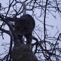 Дикий кот :: Va3um 7