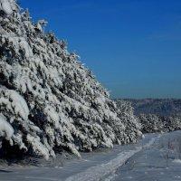 Мороз и солнце! :: Дмитрий Арсеньев
