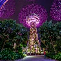 Футуристические сады. Сингапур :: Dmitriy Sagurov