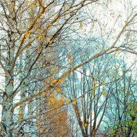 тропинка во дворе :: Михаил Николаев