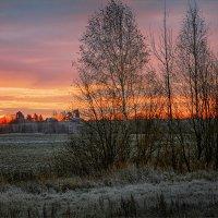 Осеннее солнышко... :: Александр Никитинский