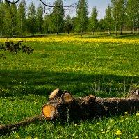 Весенний этюд :: Александр Березуцкий (nevant60)