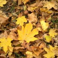 Осенние листья :: Svetlana Lyaxovich