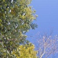 Синее небо :: Olga Rosenberg