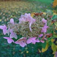 Нежность ноября... :: Galina Dzubina