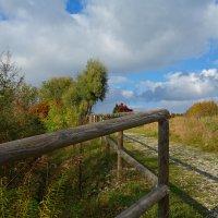 Сколько красок у осени разных... :: Galina Dzubina