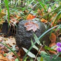 Осень и камень красит :: Михаил Кондратенко