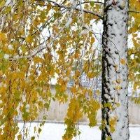 Зима наступает на пятки осени!) :: Марина Романова
