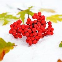 Рябина на снегу) :: Марина Романова