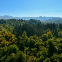 над вершинами деревьев :: Vitalij P