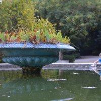 Заброшенный фонтан. :: Оля Богданович
