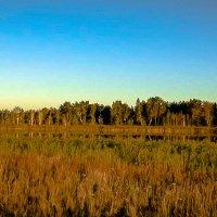 Гуселетовские озера :: Лариса Димитрова